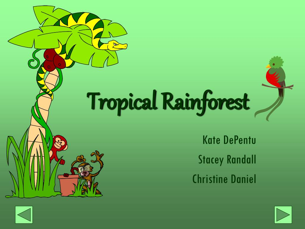 ppt tropical rainforest powerpoint presentation id 1733948