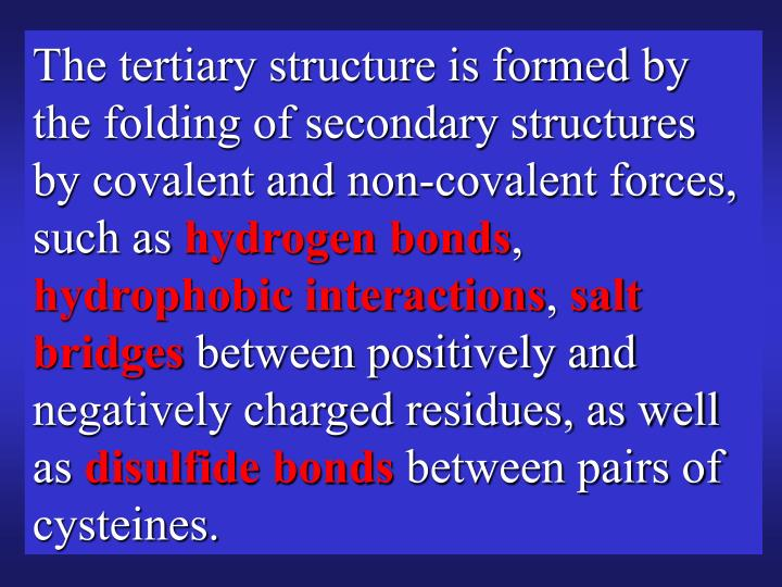 The tertiary structure is formed by the folding of secondary structures by covalent and non-covalent forces, such as