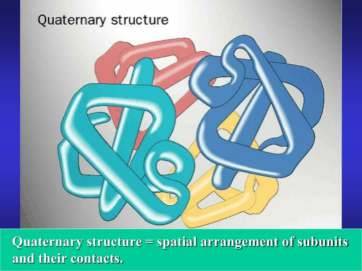 Quaternary structure = spatial arrangement of subunits and their contacts.
