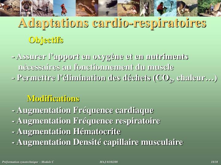 Adaptations cardio-respiratoires
