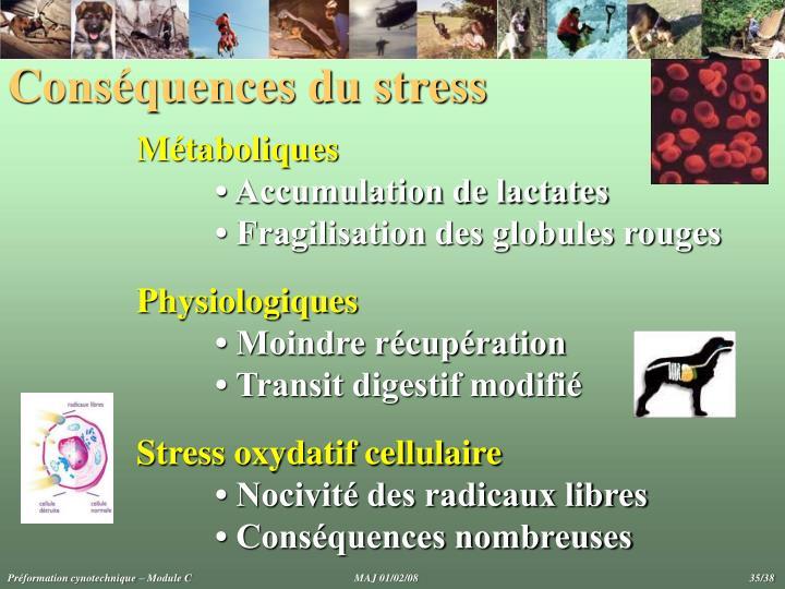 Conséquences du stress