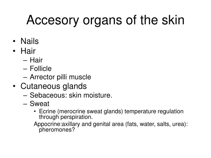 Accesory organs of the skin