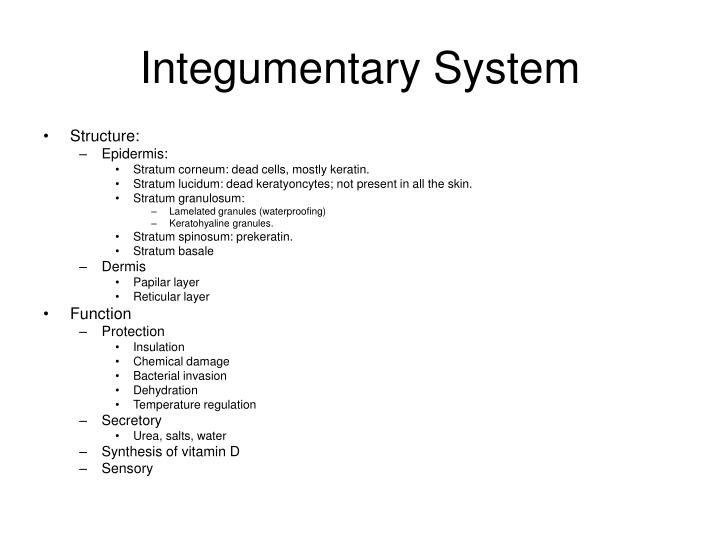 Ppt Integumentary System Skin Powerpoint Presentation Id1735021