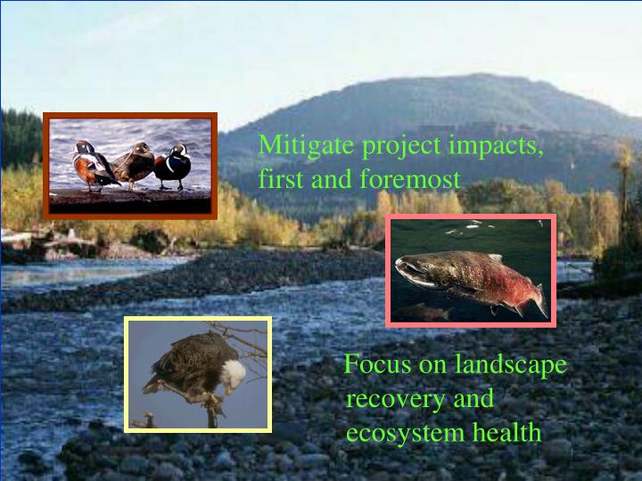 Mitigate project impacts, first and foremost