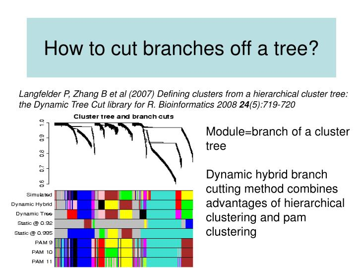 How to cut branches off a tree?