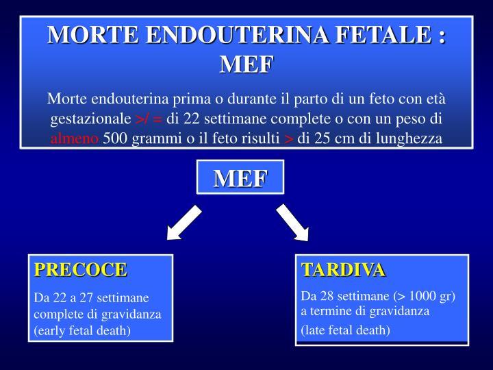 MORTE ENDOUTERINA FETALE : MEF