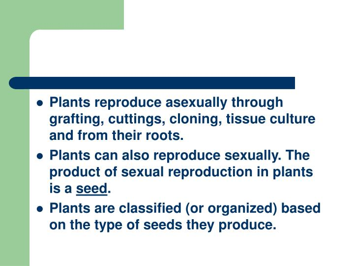 Plants reproduce asexually through grafting, cuttings, cloning, tissue culture and from their roots....