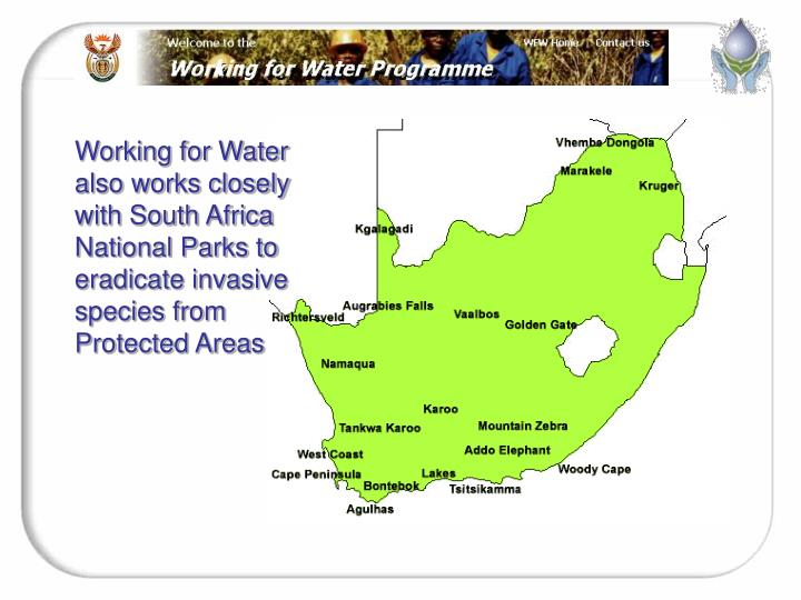 Working for Water  also works closely with South Africa National Parks to eradicate invasive species from Protected Areas