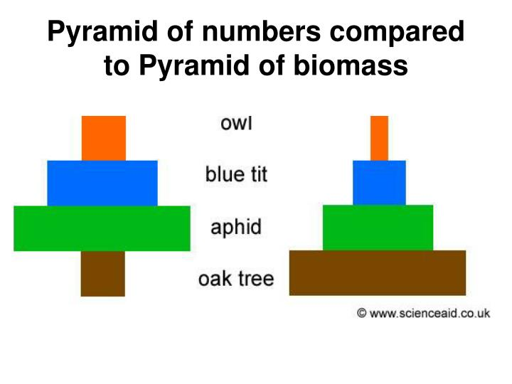 PPT - Ecological Pyramids and Biogeochemical cycles ...