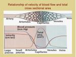 relationship of velocity of blood flow and total cross sectional area