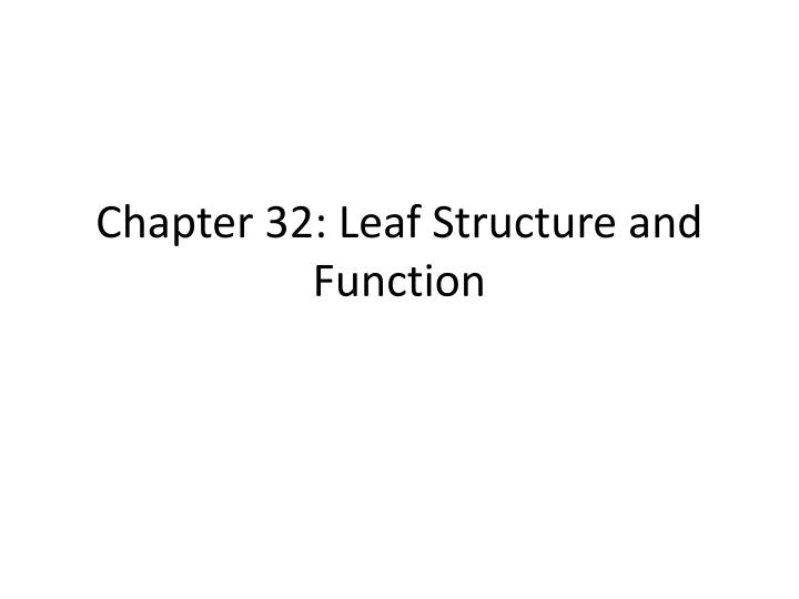 chapter 32 leaf structure and function n.
