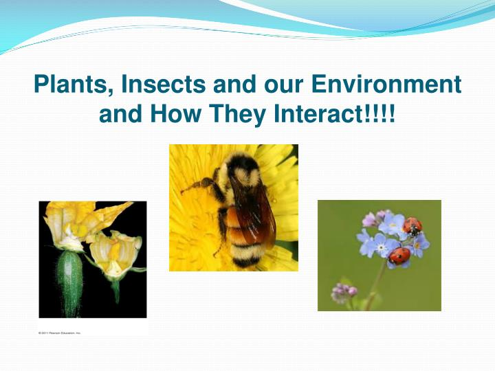 plants insects and our environment and how they interact n.