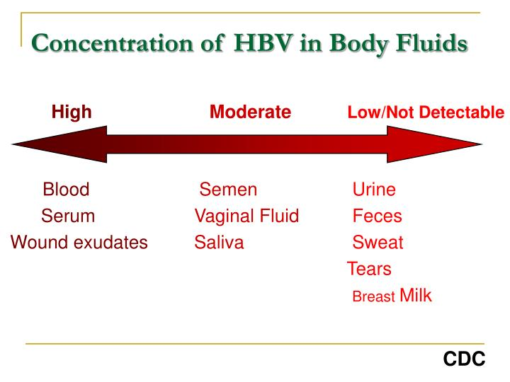 Concentration of HBV in Body Fluids