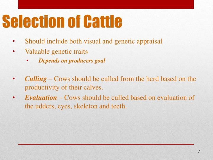 Selection of Cattle