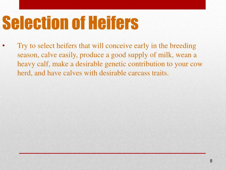 Selection of Heifers