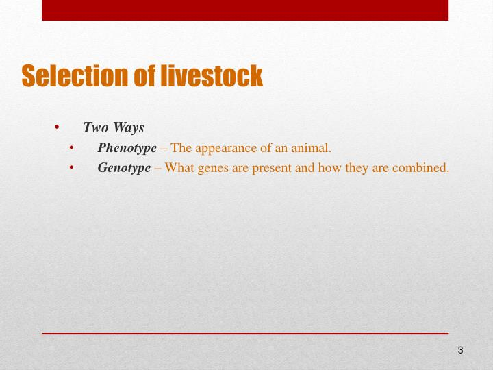Selection of livestock