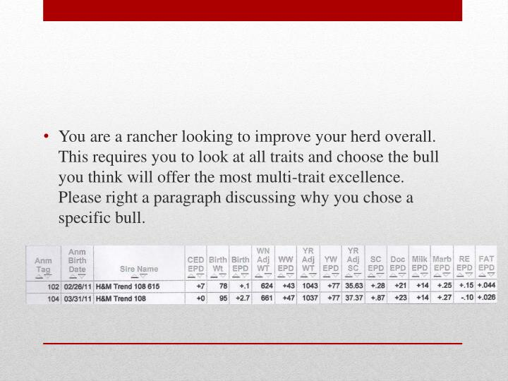 You are a rancher looking to improve your herd overall.  This requires you to look at all traits and choose the bull you think will offer the most multi-trait excellence.  Please right a paragraph discussing why you chose a specific bull.