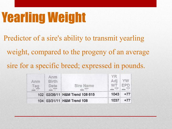 Yearling Weight