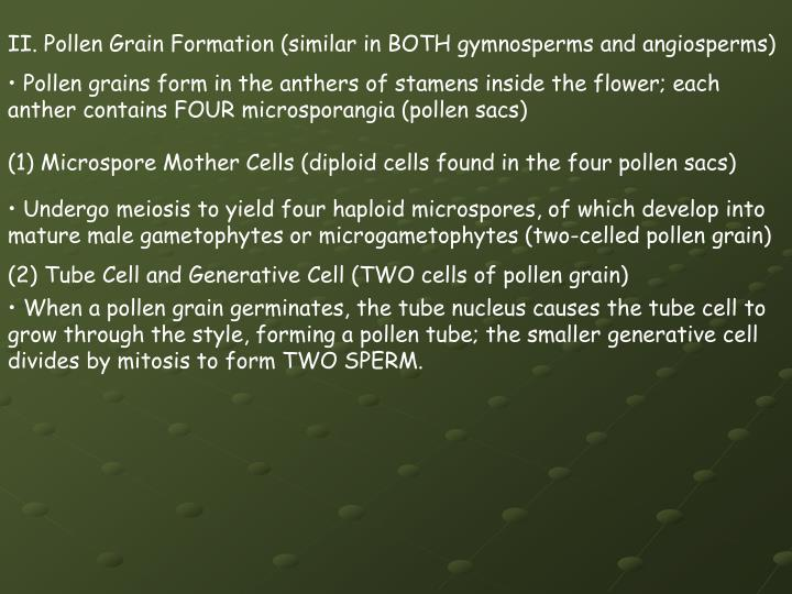 II. Pollen Grain Formation (similar in BOTH gymnosperms and angiosperms)