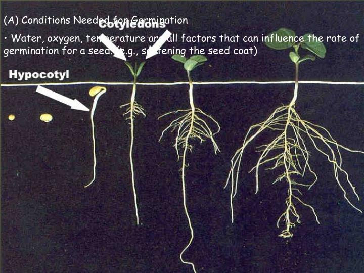 (A) Conditions Needed for Germination