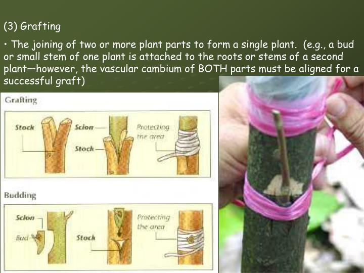 (3) Grafting