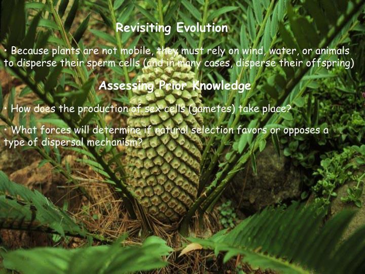 Revisiting Evolution