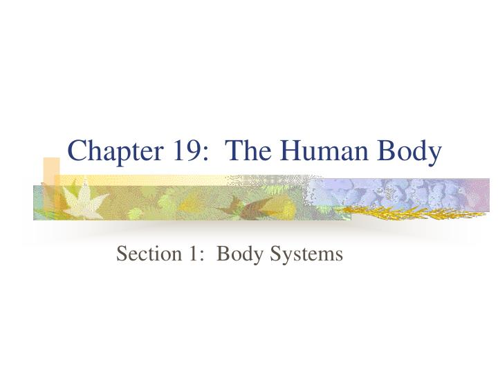 chapter 19 the human body n.