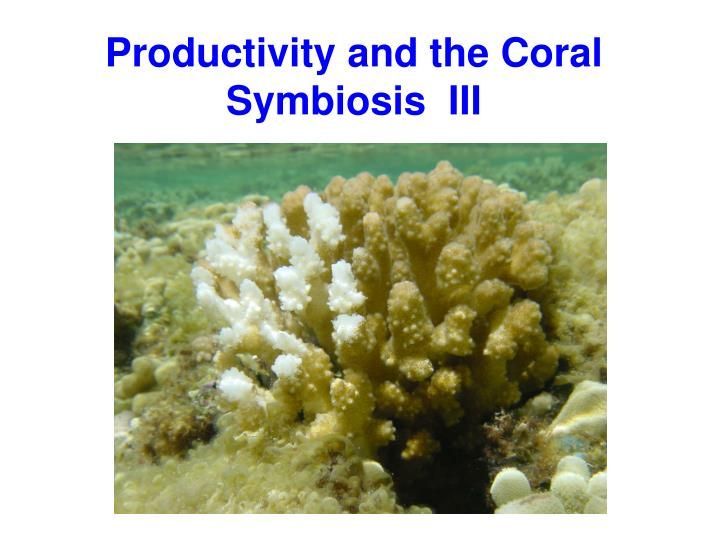 productivity and the coral symbiosis iii n.