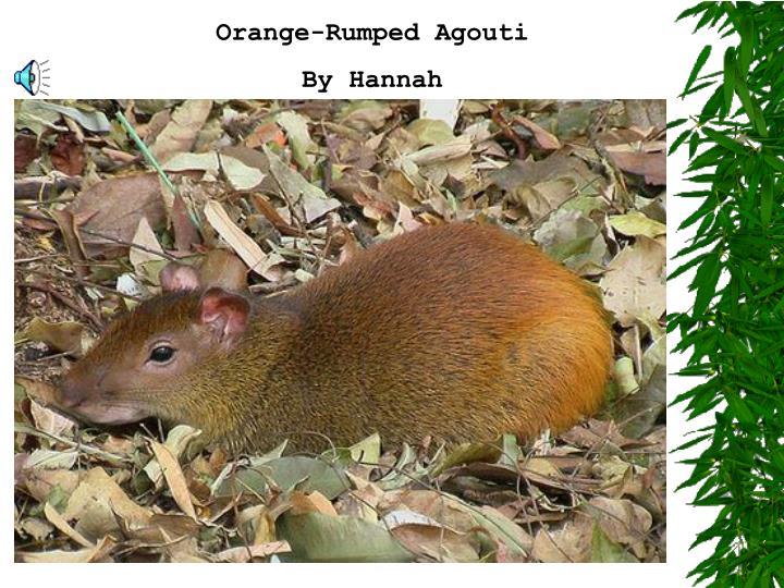 Orange-Rumped Agouti