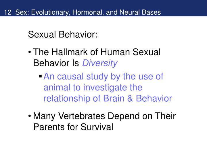 Sexual activities in humans powerpoint