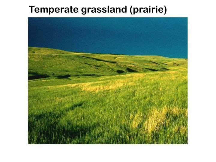 Temperate grassland (prairie)
