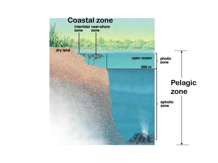 Coastal zone