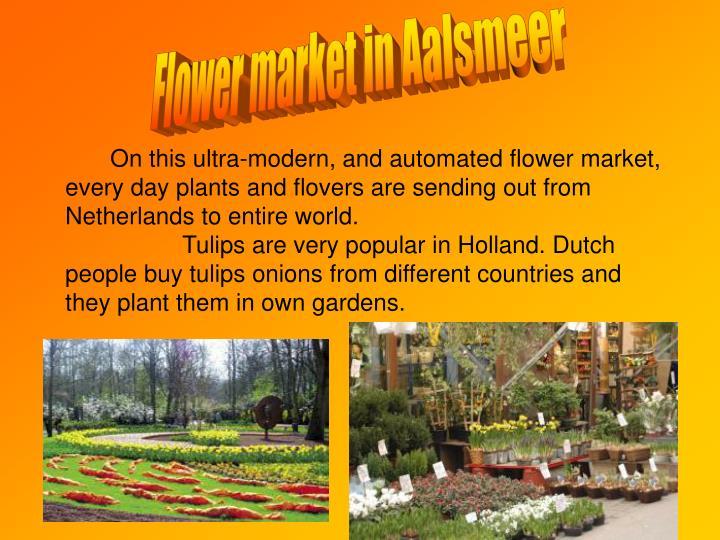 Flower market in Aalsmeer