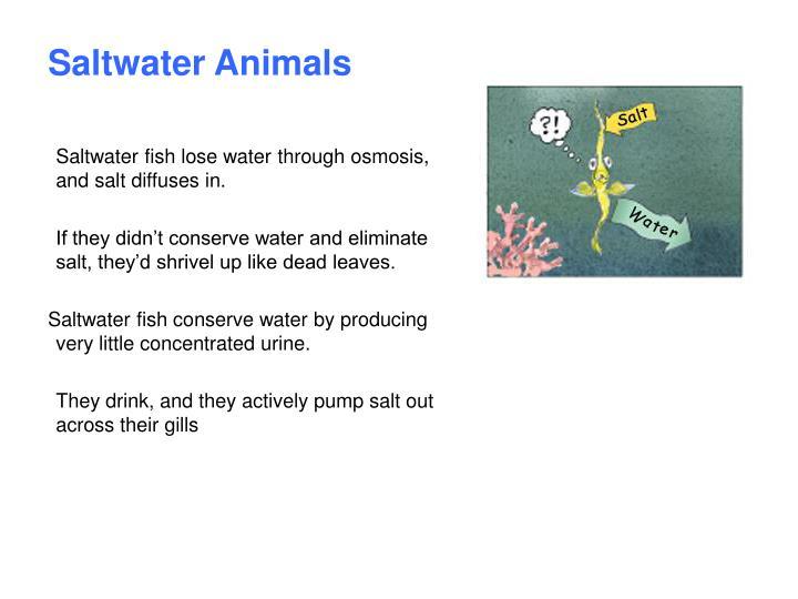 Saltwater Animals