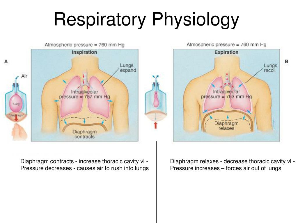 Ppt Respiratory Physiology Powerpoint Presentation Id1755700