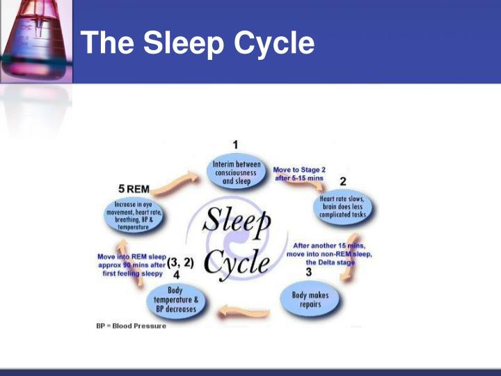 The Sleep Cycle