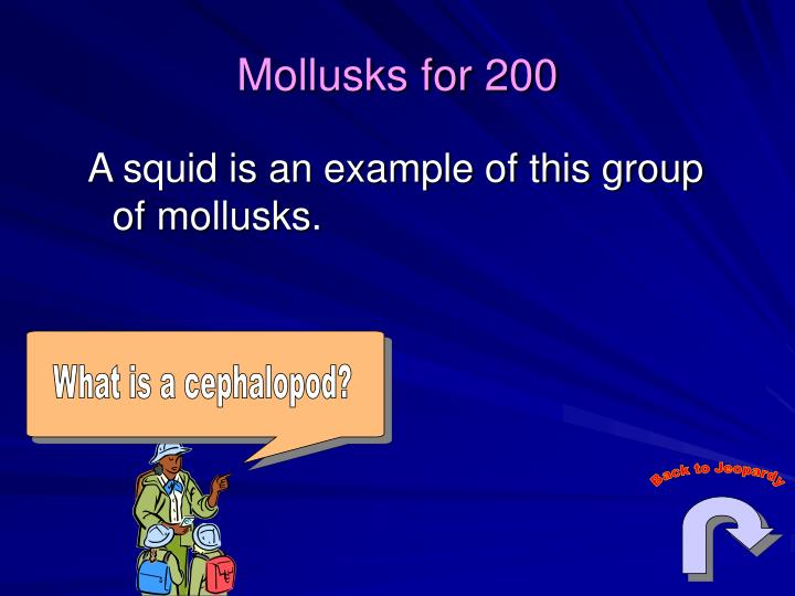 What is a cephalopod?