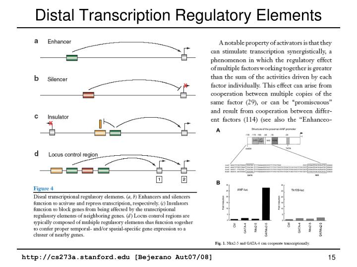 Distal Transcription Regulatory Elements