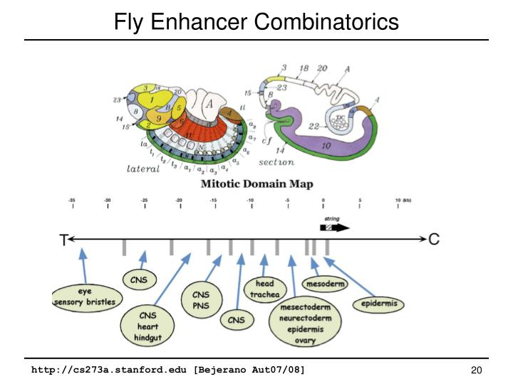 Fly Enhancer Combinatorics