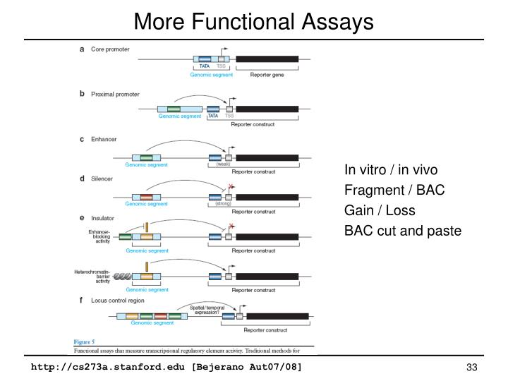 More Functional Assays