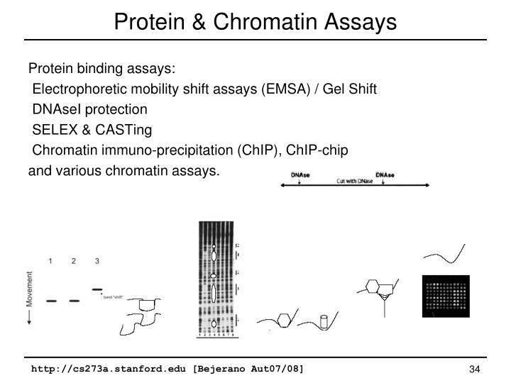 Protein & Chromatin Assays