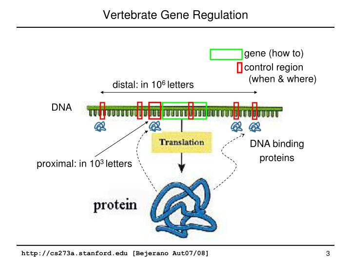 Vertebrate Gene Regulation