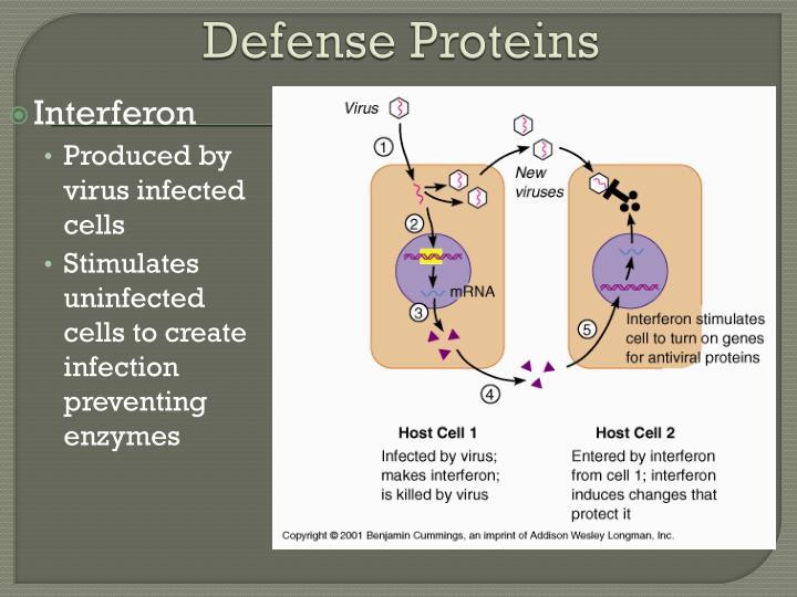 Defense Proteins