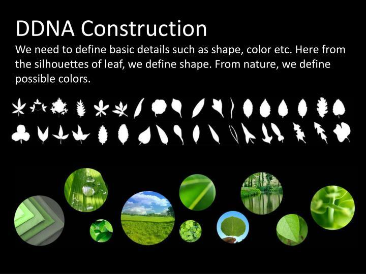 DDNA Construction