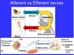 afferent vs efferent nerves
