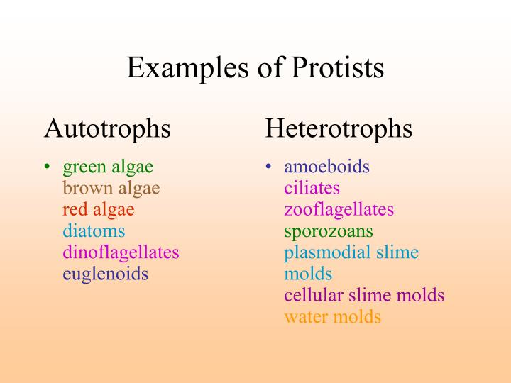 ppt - protists and fungi powerpoint presentation