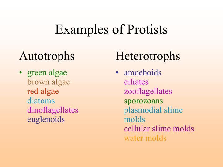 autotrophs vs heterotrophs venn diagram  ppt protists and fungi powerpoint  presentation id 1760764
