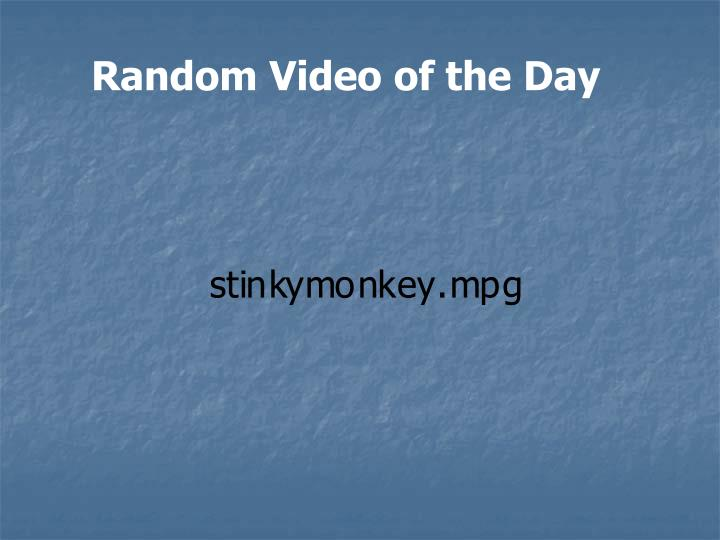 Random Video of the Day