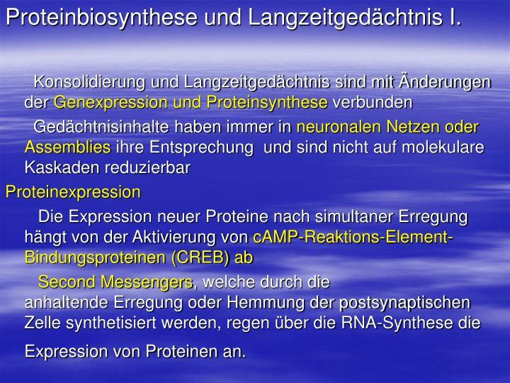 Proteinbiosynthese und Langzeitgedächtnis