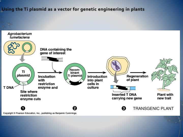 genetic engineering in plants Now we will dive into the pros and cons of genetic engineering now pros of genetic engineering / advantages of genetic engineering supporters of genetic engineering believe that genetic engineering is indeed safe and is still comparable to the traditional process of breeding in plants and animals.